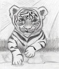 tiger cub sketch by alisan jieh fantasy on deviantart