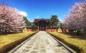 6 places to see the cherry blossoms in japan this minus the