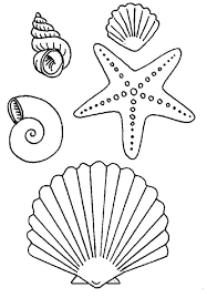 reduced starfish coloring page images for simple seashell drawings