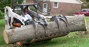 carmichaels tree service tree cutters tree trimmers tree