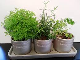 Herbs Indoors Best Indoor Herb Plants