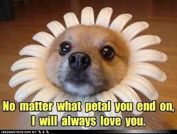 Puppy Memes - 11 inspirational dog memes my cinema lightbox