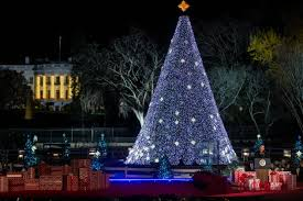 christmas trees and lights get in the holiday spirit with these light displays and events in