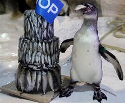 Penguin Birthday Meme - fishy penguin birthday cake penguin place post