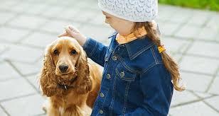 10 best breeds for families cesar s way