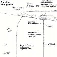 shark drumline diagram abc news australian broadcasting