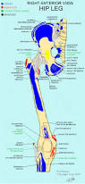What Is Human Anatomy And Physiology 137 Best Pta Images On Pinterest Occupational Therapy Physical