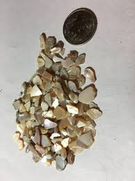 mother of pearl mop chips pieces for coastal home decor displays