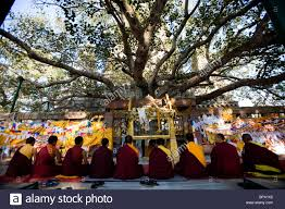 tibetan monks praying the bodhi tree where the buddha reached