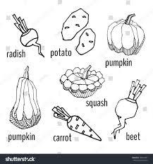 coloring book roots radish potato pumpkin stock vector 392524381
