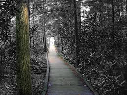 Monongahela national forest a west virginia natlforest