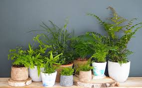 how to care for your houseplants let u0027s talk about ferns