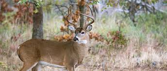Mississippi wildlife images Mississippi chapter opposes hunting of deer over bait the jpg