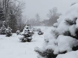 Wholesale Christmas Decorations In Michigan by Wilson U0027s Tannenbaum Farm