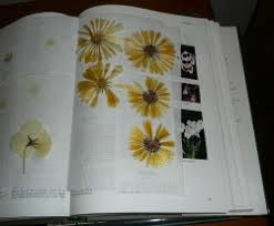 Flowers In A Book - how to press flowers in a book flower inspiration