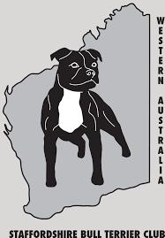 america pit bull terrier club staffordshire bull terrier club of western australia