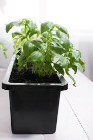 Indoor Herb Garden Kit Australia - best 25 herb garden kit ideas on pinterest pruning basil