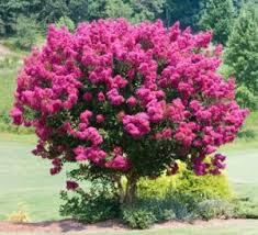 top 10 beautiful small trees to plant near house with small spaces