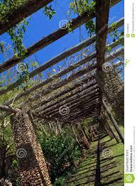 photos de pergola de pergola van de wijnstok bij de tuinen van fairchild stock