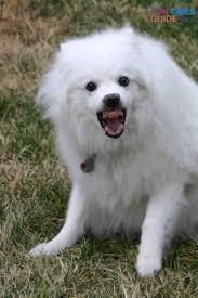 dog tricks teach your dog how to u0027show teeth u0027 the dog guide