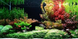 Aquascape Designs Products Understanding Dutch Aquascaping Style The Aquarium Guide