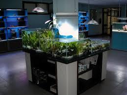 vasche acquario acquario per negozio banchi vendita cassa per arredamenti negozi