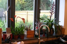 kitchen window sill ideas tag for kitchen window sill decorating ideas bay windows