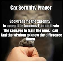 Serenity Prayer Meme - cat serenity prayer god grant me the serenity to acceptthe humans i
