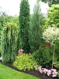 landscaping ideas with trees and shrubs best shrubs to plant around