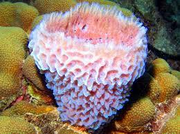 Azure Vase Sponge Facts Index Of Pool Images 2 25
