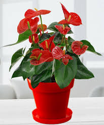 easy growing best indoor houseplants for india