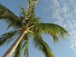 ecuadorian walking palm trees can move for up to 3 cm per day woodz
