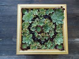 Make A Brick Succulent Planter - succulent wall art 9 steps with pictures