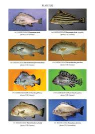 new fao species identification tools for marine resources of