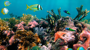 Iowa snorkeling images Belize glover 39 s reef jungle multisport vacation travel with rei