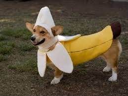 a funny banana costume for dogs