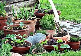 clever ideas vegetable garden containers interesting design
