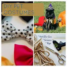 halloween diy costumes for your pet pet sit prospet sit pros