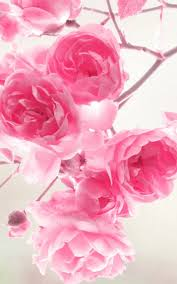 Pink Roses Wallpaper by Pink Roses Flowers Mobile Wallpaper Mobiles Wall