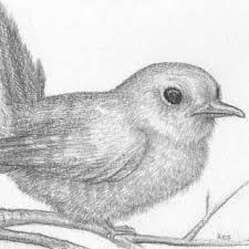 bird drawing pencil sketch of fledgling small original birds