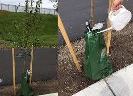belmont garden club trees treegator bags