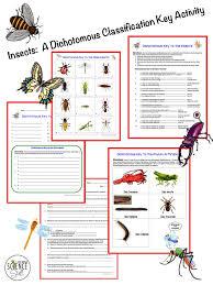 best 25 dichotomous key ideas on pinterest life science