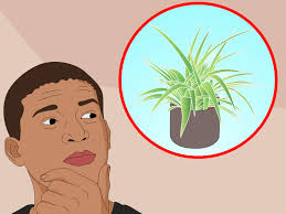 how to care for indoor plants 15 steps with pictures wikihow