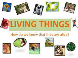 Characteristics Of Living Things Worksheet Middle Living Things Seven Characteristics By Dragabi Teaching