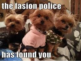 Fashion Police Meme - fashion police for dogs meme your friends