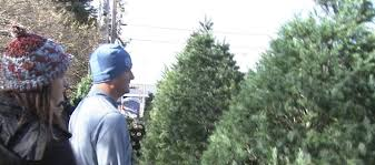 live christmas trees where to drop live christmas trees local news 13 wthr