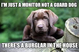 Meme Monitor - i m just a monitor not a guard dog there s a burglar in the house
