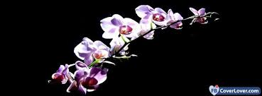 purple orchids purple orchids flowers cover maker fbcoverlover