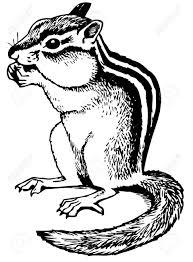 ground squirrels stock photos u0026 pictures royalty free ground