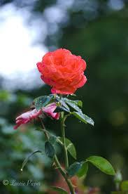 the james w berry memorial rose garden manhattan city park a